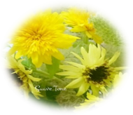 flower_pic01